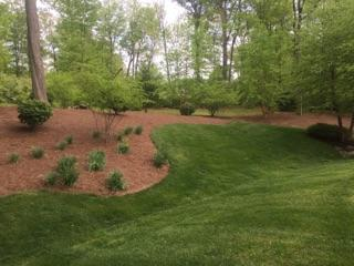 Lawn Maintenance & Edging