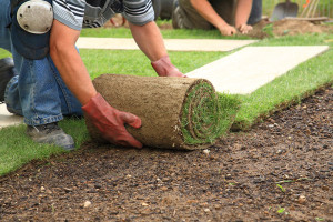 Sod, Shrub & Tree Care Commercial Service