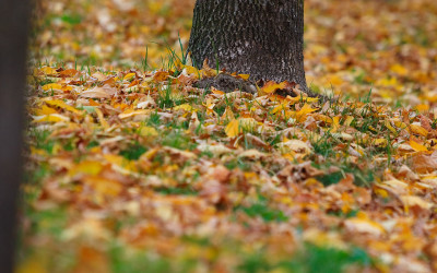 The air is crisp that means it's time for Fall clean-up