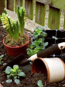 Flower Pot and Garden